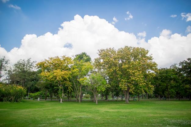 Le jardin vert magnifique parc avec le ciel bleu clair