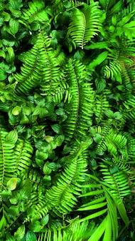 Jardin vertical avec feuille verte tropicale, contraste