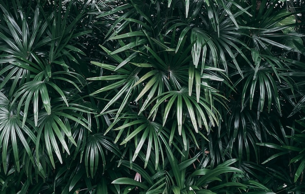 Jardin vertical avec feuilles vert tropical, ton foncé