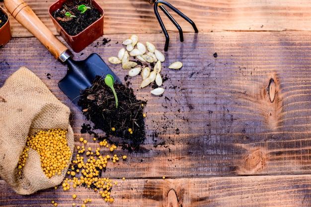 Jardinage domestique pendant le verrouillage et l'auto-quarantaine. planter un arbre au jardin botanique pendant la crise du virus corona. restez à la maison pour la détente et la distanciation sociale.