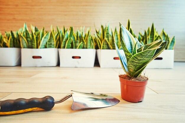 Jardinage - ensemble d'outils pour jardinier et pots de fleurs dans un jardin ensoleillé