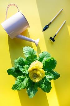 Jardinage de fleurs en pot, arrosoir et outils sur fond gris. travail d'été et de printemps dans le jardin fleuri. loisir. horticulture.