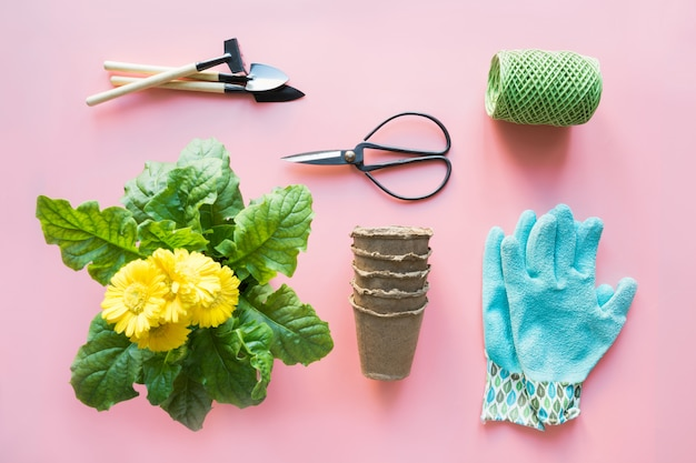 Jardinage avec gerbera, outils et fleurs en rose. vue de dessus. espace de copie.