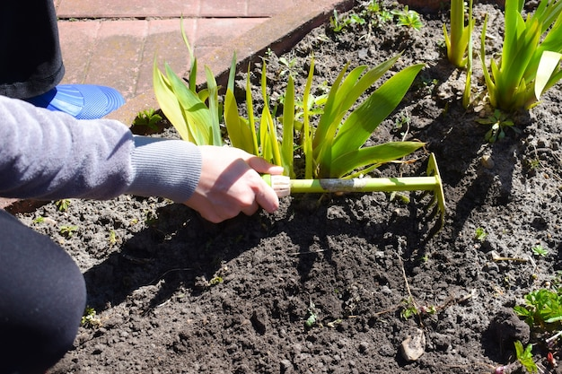 Jardinage. planter des fleurs dans des pots de fleurs. une femme travaille dans le jardin.