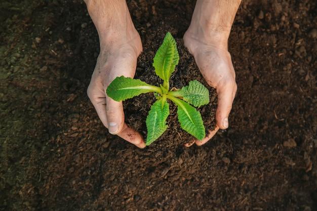 Jardinage, planter des plantes dans le jardin. jardin. mise au point sélective.