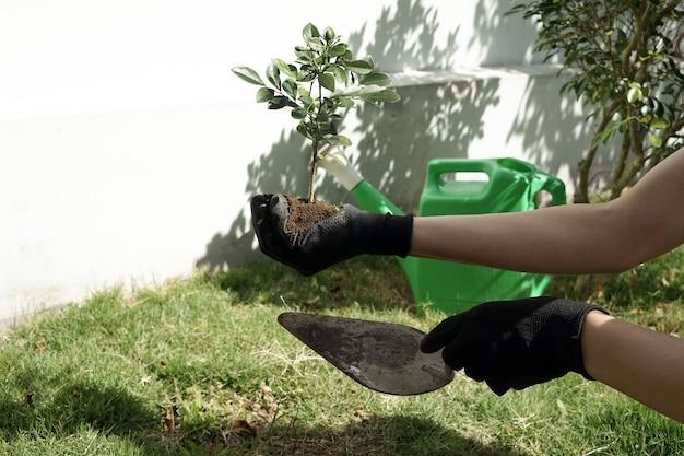 Jardiner et planter un arbre