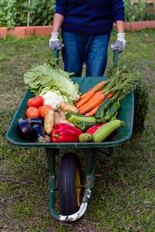 Jardinier à angle élevé tenant une brouette avec des légumes