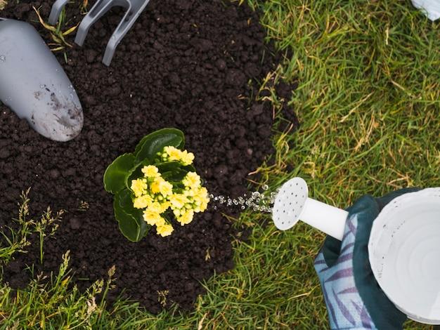 Jardinier arrosant la plante succulente dans le sol