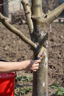 Jardinier blanchir le tronc d'arbre avec de la craie dans le jardin, soin des arbres au printemps. une femme jardinière s'occupe des arbres dans la rue du parc.
