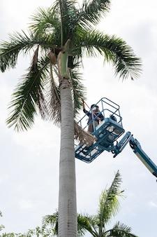 Jardinier coupant des branches sur un panier de grue. concept dangereux
