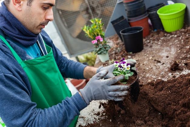 Jardinier dans une serre transplantation de pensées à vendre.
