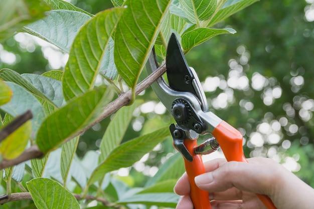 Jardinier élagage des arbres avec des cisailles sur fond de nature.