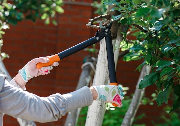 Jardinier élagage des arbres fruitiers avec un sécateur.