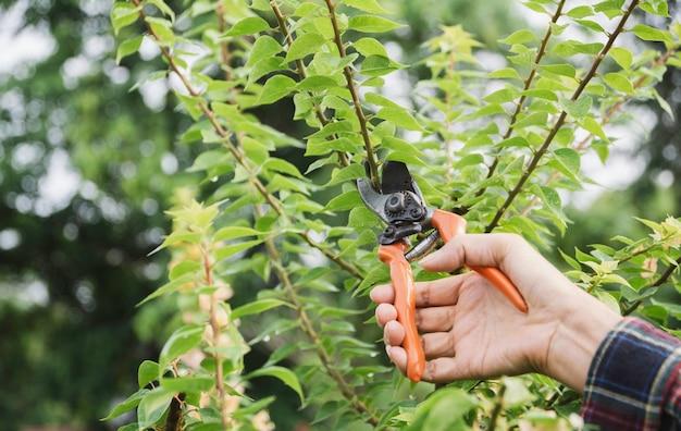 Jardinier élagage des arbres avec un sécateur sur fond de nature.