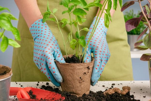 Jardinier femelle organisant des plantes à la maison à l'aide d'outils