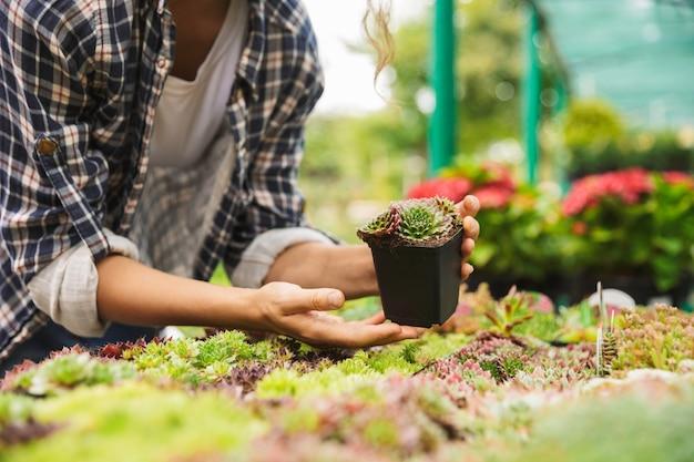 Jardinier femelle travaillant avec des fleurs en serre