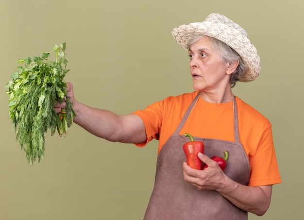 Jardinier femme âgée confiant portant un chapeau de jardinage tenant des poivrons rouges et un bouquet de coriandre regardant de côté