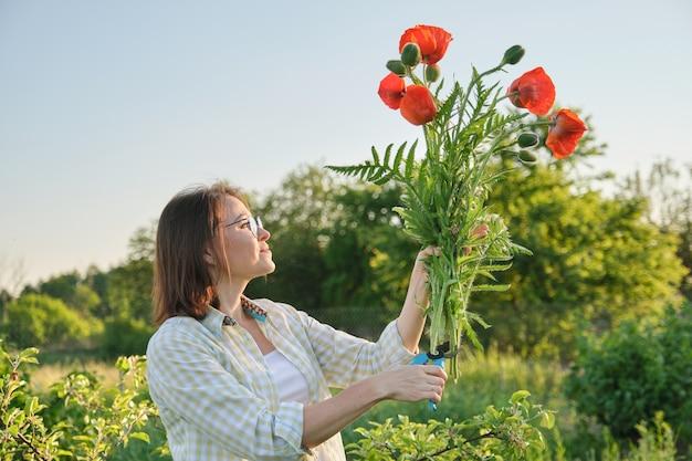 Jardinier femme coupant des coquelicots de fleurs rouges avec sécateur de jardin