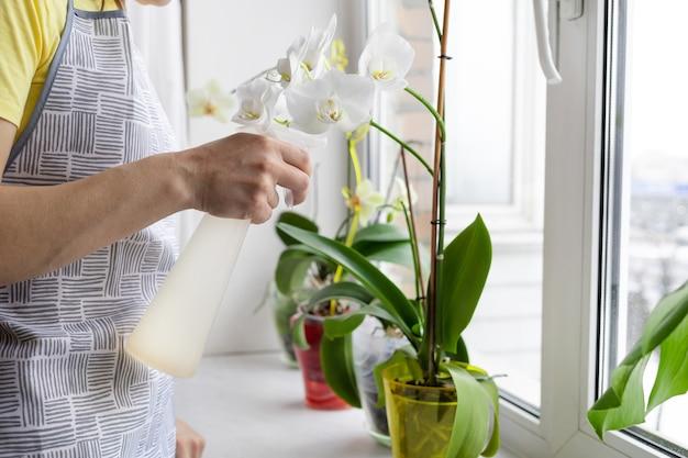 Jardinier de femme prenant soin des plantes d'intérieur