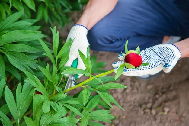 Jardinier fleurs de taille jardin. la nature.
