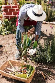 Un jardinier mâle coiffé d'un chapeau plantant des plantes dans le jardin
