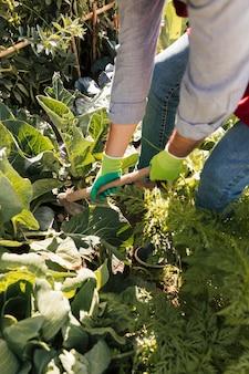 Un jardinier mâle cultivant les plantes dans le jardin