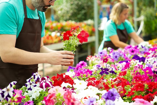 Jardinier mâle méconnaissable tenant un pot avec des fleurs rouges. femme blonde floue s'occuper et vérifier les plantes en fleurs en serre avec un collègue. activité de jardinage et concept d'été