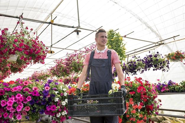 Jardinier mâle transporte des fleurs dans une caisse en serre industrielle