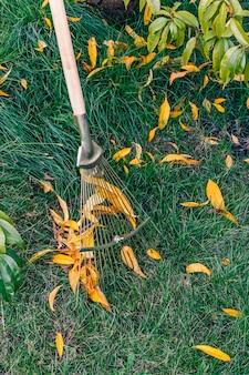 Le jardinier nettoie une pelouse avec un râteau en automne. arbre et herbe verte sur le fond.