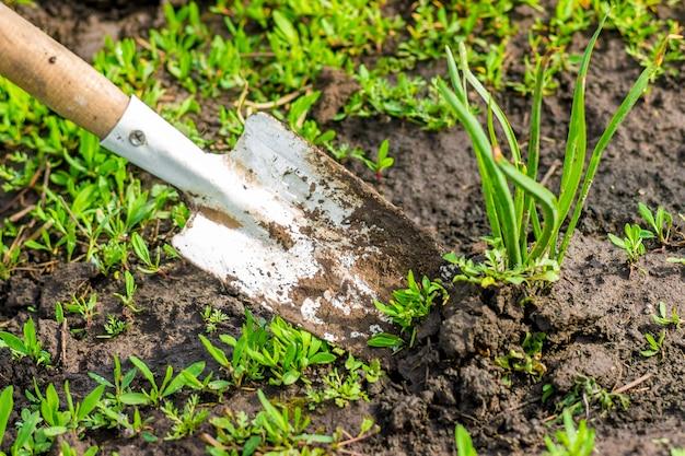 Un jardinier avec une pelle transplante la plante dans le jardin