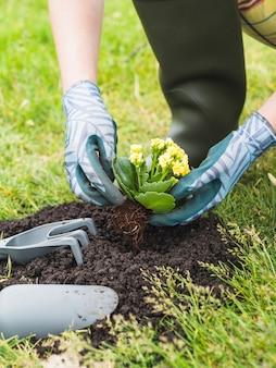 Jardinier plantant succulente dans le sol