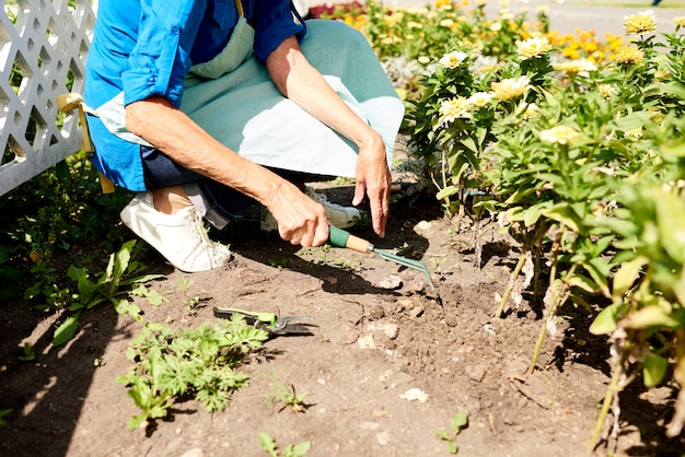 Jardinier, plantation, fleurs, closeup