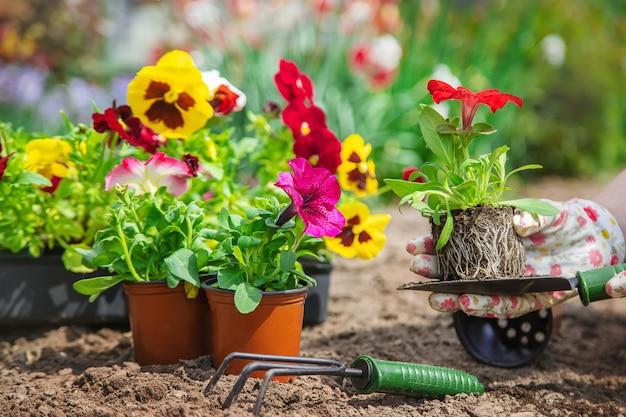 Le jardinier plante un jardin fleuri. mise au point sélective.