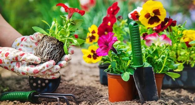 Le jardinier plante un jardin fleuri