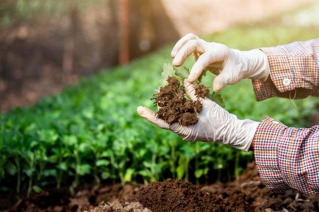 Jardinier portant des gants est de planter un jeune arbre sur un sol noir dans le jardin