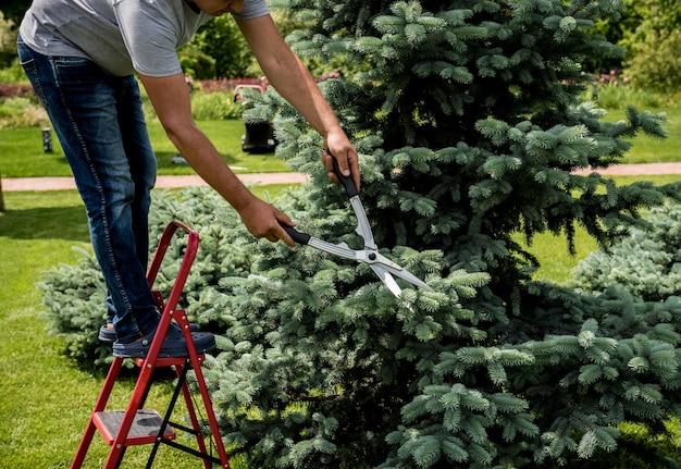 Jardinier professionnel élagage un arbre avec des ciseaux de jardin. aménagement paysager. jardinage