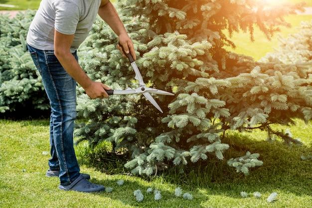 Jardinier professionnel élagage d'un arbre avec des ciseaux de jardin