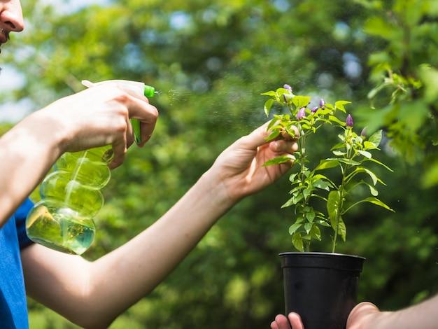 Jardinier, pulvérisation d'eau sur une plante en pot