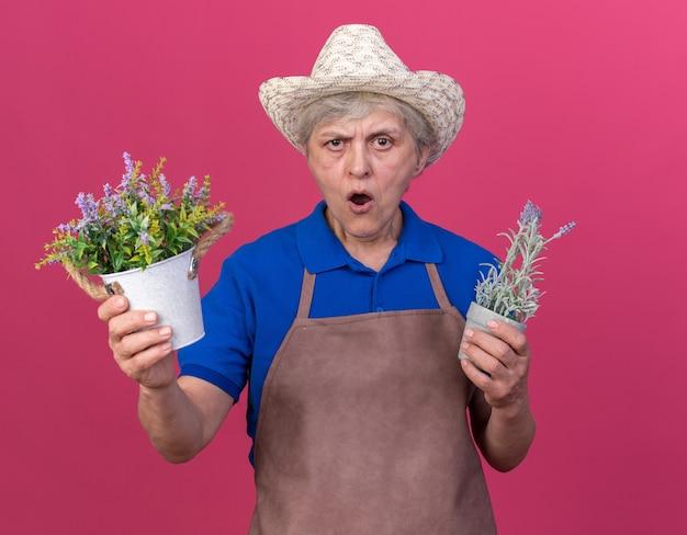 Jardinière âgée agacée portant un chapeau de jardinage tenant des pots de fleurs isolés sur un mur rose avec espace pour copie