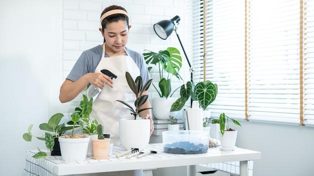 Jardinière asiatique en vêtements décontractés, prend soin des plantes et de l'eau pulvérisée avec un vaporisateur brumeux pour les plantes sur la table dans la pièce à la maison pendant l'activité de loisir, concept de jardin familial