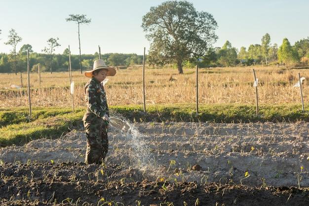 Jardinière femme arrosant des légumes dans son jardin