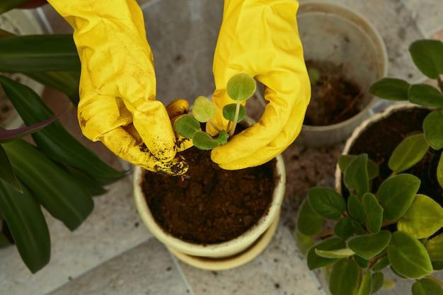 Jardiniers main dans des gants jaunes plantant des fleurs en pot.