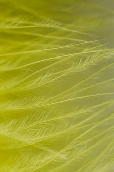 Un jaune une plume close-up macro background