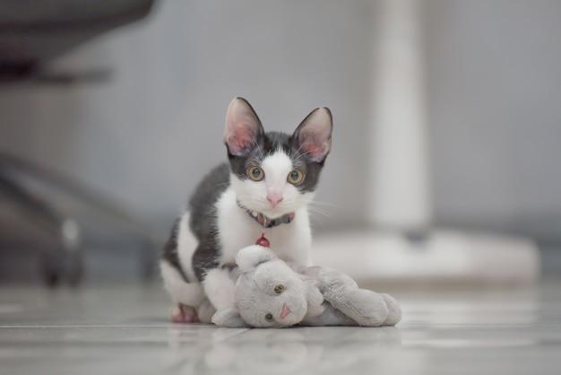Jeu de chat gris mignon avec poupée chaton poser sur le sol