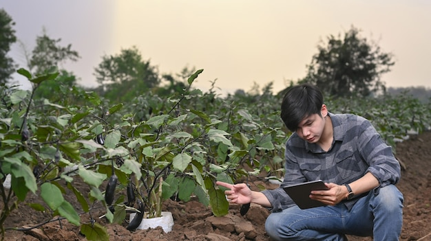 Jeune agriculteur asiatique intelligent utilisant une tablette pour vérifier la qualité et la quantité du potager hydroponique biologique.