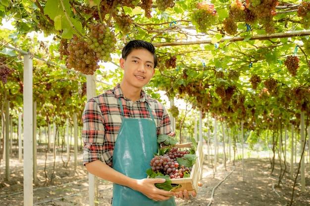 Jeune agriculteur asiatique tenant des raisins après la récolte sous forme de vignoble, concept de fruits sains.