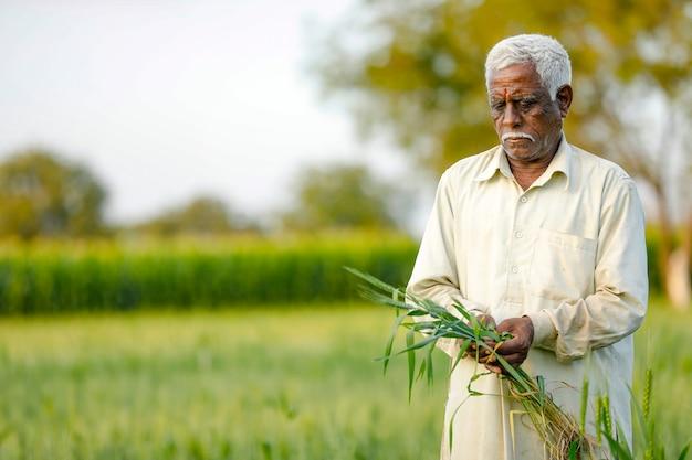 Jeune agriculteur indien debout au champ de blé