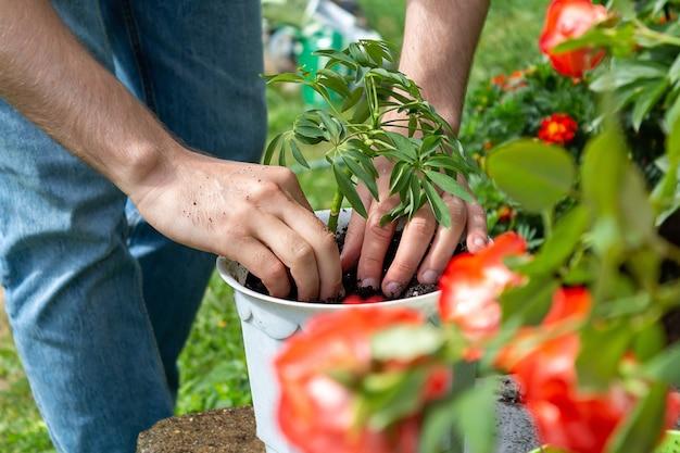 Jeune agriculteur plante plante en pot blanc