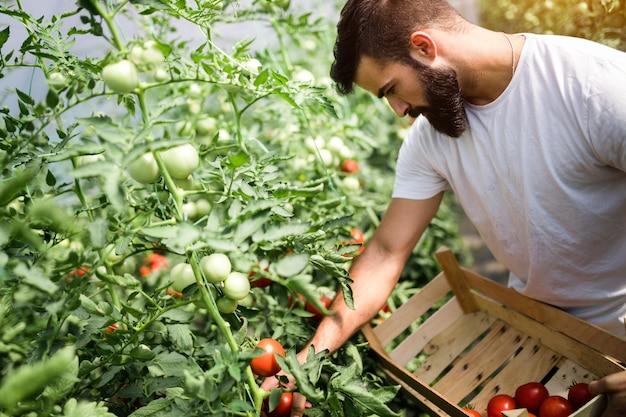 Jeune agriculteur sympathique au travail en serre