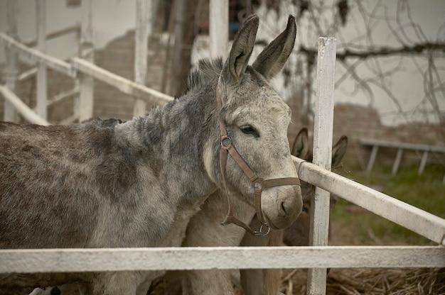 Jeune âne enfermé dans sa clôture à la ferme d'élevage.